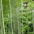 竹林とあじさい